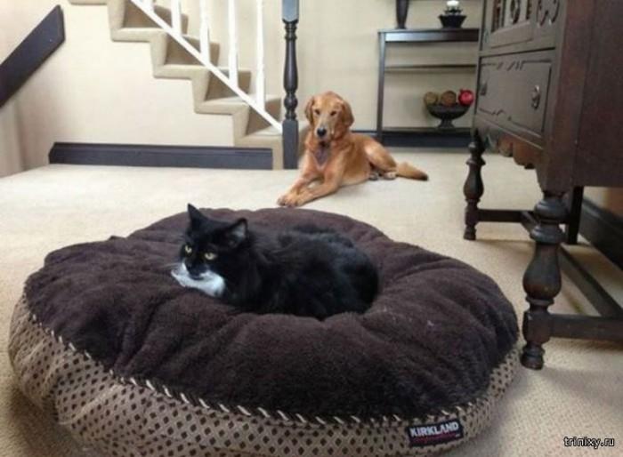 how to make a cat litter box enclosure