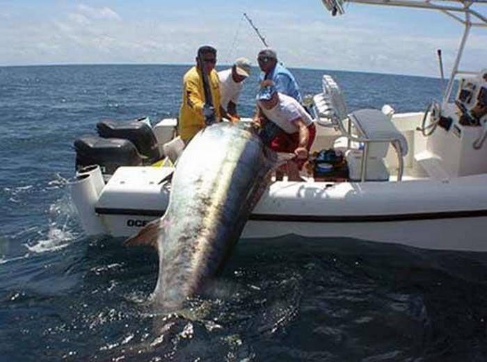 сайт если морская рыбалка слодке смотреть видио использую вино, соки